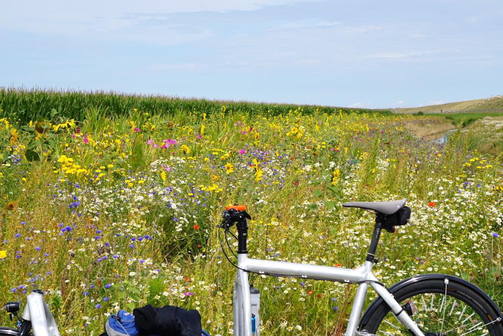 Bullitt Cargobike Texel Blumenwiese