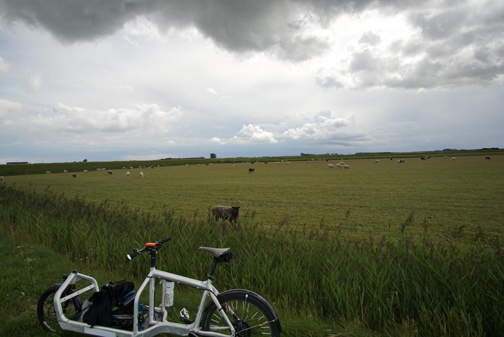 Bullitt Cargobike Texel Schafwiese